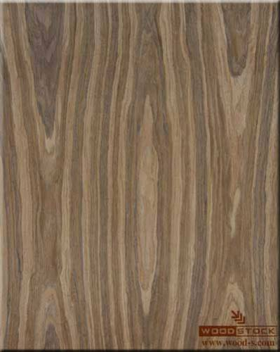 shpon_woodstock_507