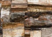 Petrified Wood_Classic
